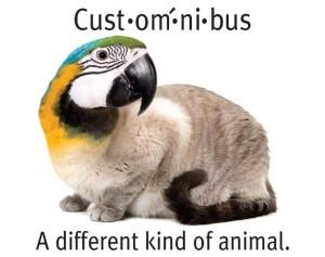 parrot-cat