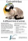 parrot-cat-thumbnail